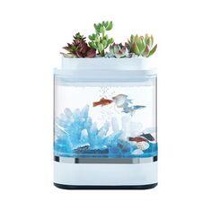 Bể cá thủy sinh HFJH mini